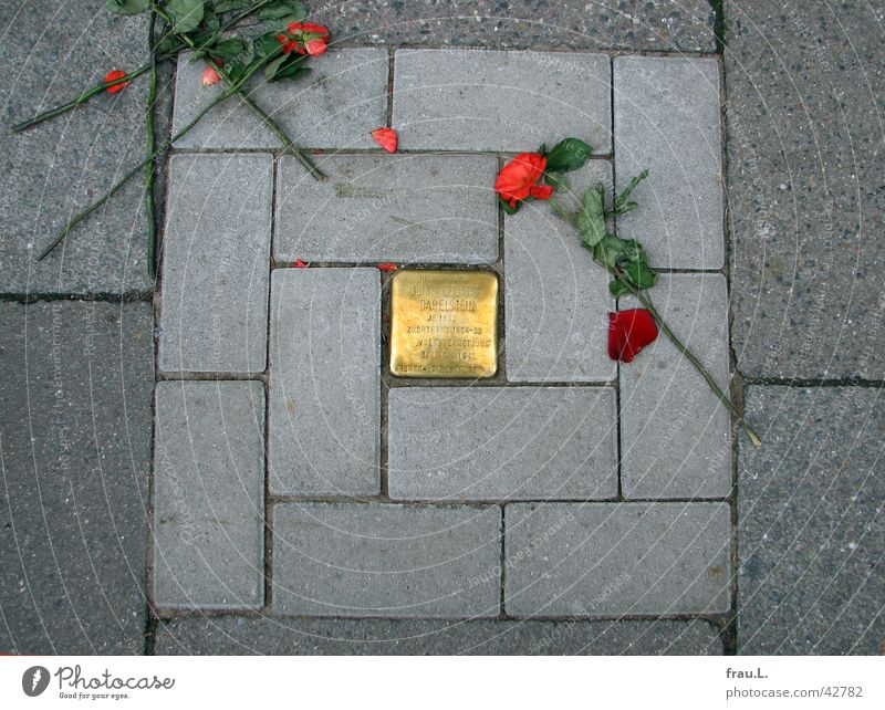 zertreten Hamburg Rose Trauer Denkmal Bürgersteig Verzweiflung Verkehrswege Wahrzeichen Sozialismus Zerstörung Kriminalität Opfer schuldig Faschismus
