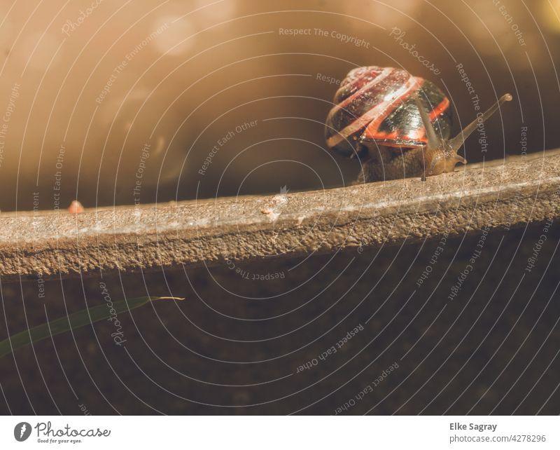 Schnecke am Rand... Weichtier Fühler Schneckenhaus Nahaufnahme Außenaufnahme Schleim Natur Auge Glätte