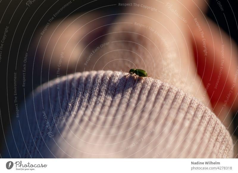 Grüner Käfer auf Ärmel Insekt Makroaufnahme Natur Nahaufnahme krabbeln Farbfoto grün klein Außenaufnahme Schwache Tiefenschärfe Hand Tag Ärmelrand Umwelt
