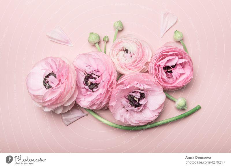 Blumenarrangements aus zarten Ranunkelblüten Ranunculus Blumenstrauß trendy Haufen Blütezeit Tapete Postkarte flache Verlegung Strauß Ranunkeln Hintergrund