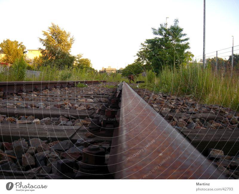 Schienen Gleise Elektrisches Gerät Technik & Technologie Eisenbahn Perspektive im Abendlicht mit Hund