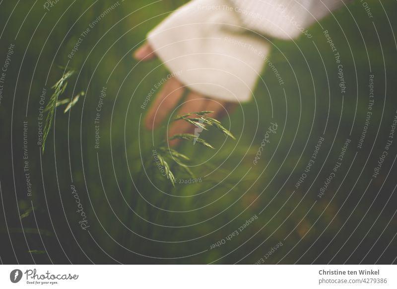 Die Hand einer jungen Frau streicht über die Gräser auf einer Wiese junge Frau Achtsamkeit Pullover grün Natur natürlich Sommer Pflanze Umwelt Wildpflanze schön