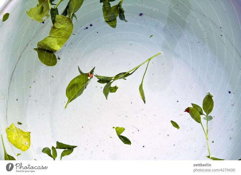 Frischer Spinat salat blatt salatblatt spinat ernte frisch wasser schüssel waschen wässern säubern abwaschen küche essen ernährung vegetarisch vegan grün
