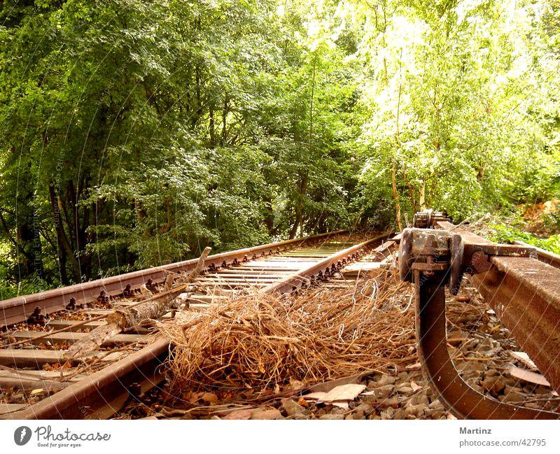 Gleis ins Grüne Gleise Verkehr Eisenbahn Industrieerinnerung ehemalige Sbahnstrecke Weg ins Grüne
