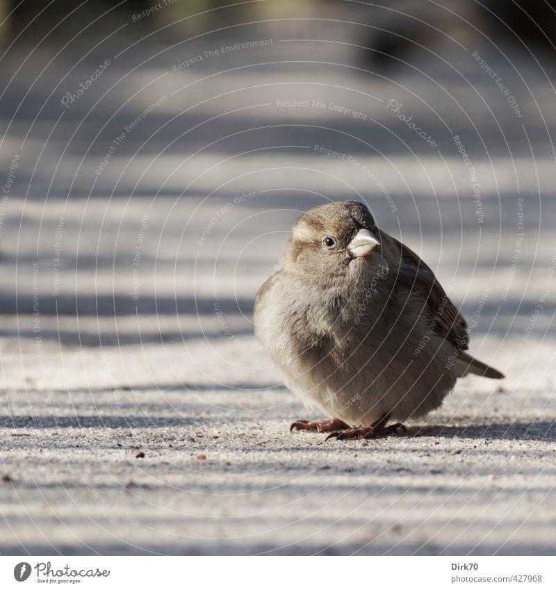 Federball 'mal anders weiß Tier schwarz feminin Wege & Pfade grau Sand braun Vogel Park sitzen Wildtier warten Schönes Wetter beobachten rund