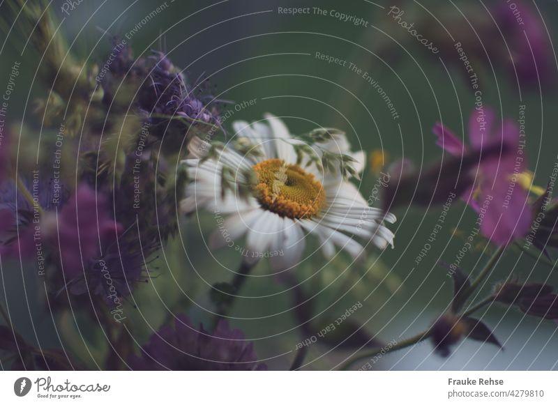 Margerite in einem Strauß Wiesenblumen und Gräsern gelb weiß grün violett lila Blume Blumenstrauß Blüte Sommer Nahaufnahme Sommerstrauß