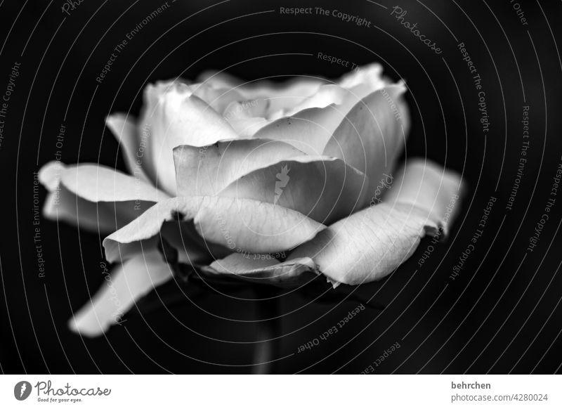 lebensbrüche | trauer Unschärfe Sonnenlicht Kontrast Licht Nahaufnahme Detailaufnahme Menschenleer Außenaufnahme Sehnsucht Trauer Traurigkeit Duft Blühend
