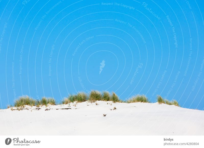 Düne mit Dünengras vor strahlen blauem Himmel Sand Stranddüne blauer Himmel Sommer Natur weißer Sand Wolkenloser Himmel warm Schönes Wetter