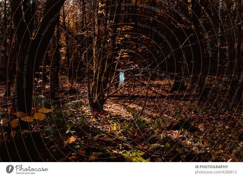 Hinterlassenschaften einer Pandemie im Wald Maske Maskenpflicht covid-19 COVID Waldboden waldgebiet Waldspaziergang pandemie Pandemie-Krise Schutz COVID-19