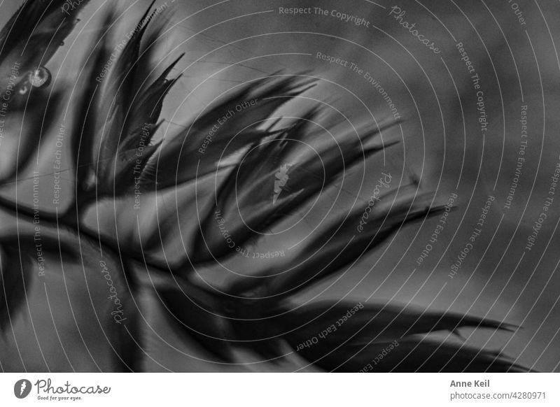 Gräser Makroaufnahme schwarz weiss Gräser im Licht Schwarzweißfoto Unschärfe Natur Außenaufnahme Wiese Pflanze natürlich Menschenleer Wildpflanze Nahaufnahme