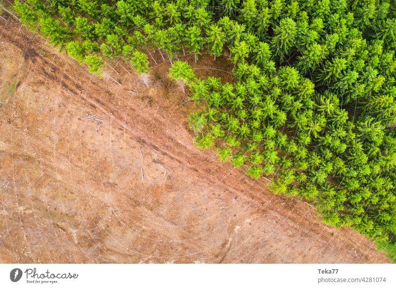 Gefälltes Waldstück gefällter wald borkenkäfer nadelwald nadelbäme top down holzfällen harvester klimawandel boden wald von oben grün