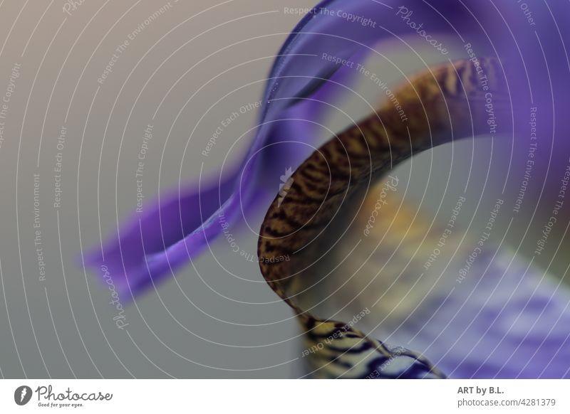 mit etwas Schwung lilie schwingung geschwungen ausschnitt blume lebendig blüte lilienblatt unscharf
