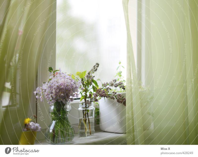 Der berühmte Vorhang Dekoration & Verzierung Frühling Sommer Blume Blüte Fenster Blühend Duft verblüht Wachstum Stimmung Frühlingsgefühle Romantik Blumenstrauß