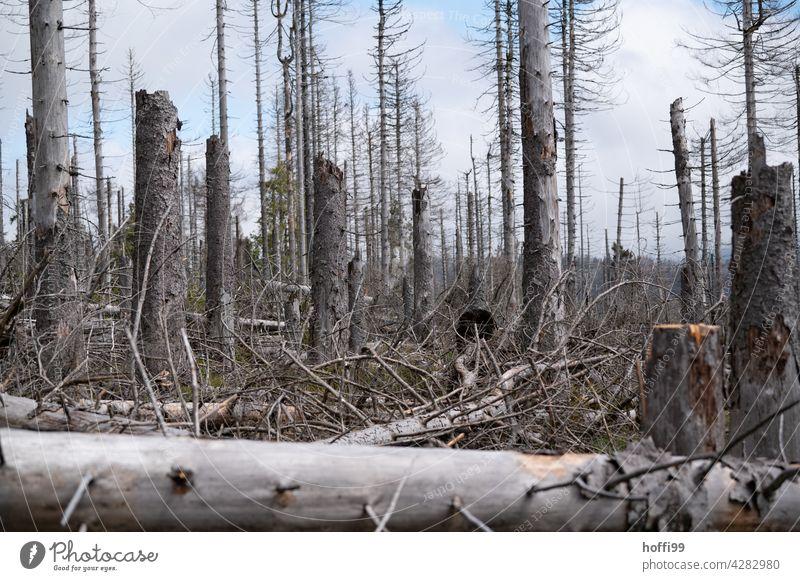 Baumsterben Borkenkäfer borkenkäferbefall Nadelwald Monokultur Wald Natur Umwelt Waldsterben Klimawandel Baumstamm Forstwirtschaft Holz Abholzung Totholz