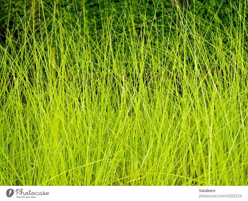 Beleuchtung auf Grashalm im Wind bei Nacht Natur Klinge grün dunkel Textur Pflanze Saison Farbe Muster Hintergrund gelb natürlich Licht Blatt im Freien Beton