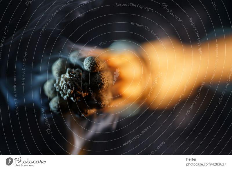 gebündelte Zündhölzer mit blauem Rauch auf schwarzem Hintergrund im Studio fotografiert Nebel Makroaufnahme Zigarettenrauch Nahaufnahme Qualm Studiobeleuchtung