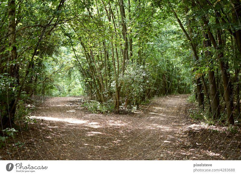 Weggabelung im Wald Waldboden Waldlichtung Natur Baum Baumstamm Waldspaziergang Bäume Waldrand Pflanze grün Waldstimmung waldgebiet Landschaft Holz Herbst