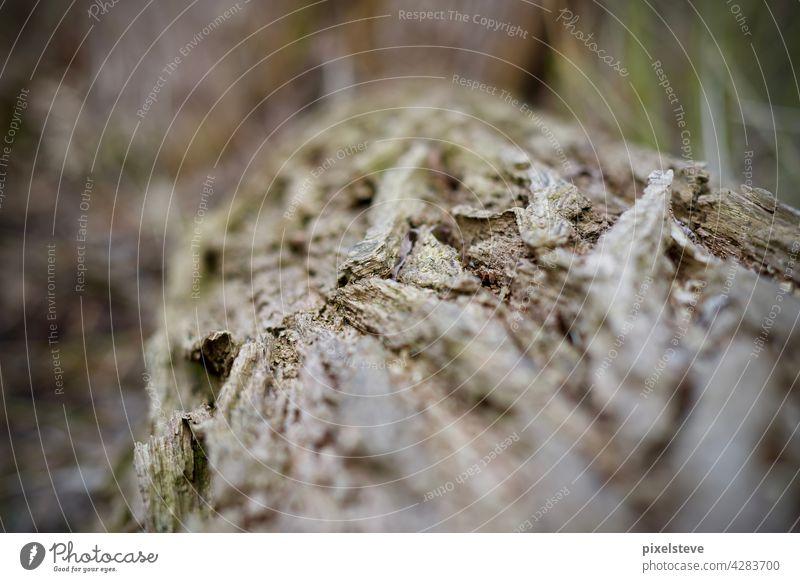 Nahaufnahme eines Baumstammes Natur Wald Äste Waldsterben Klimawandel Holz Umwelt Klimakrise Garten Baumstämme Frühling Forstwirtschaft Abholzung Totholz