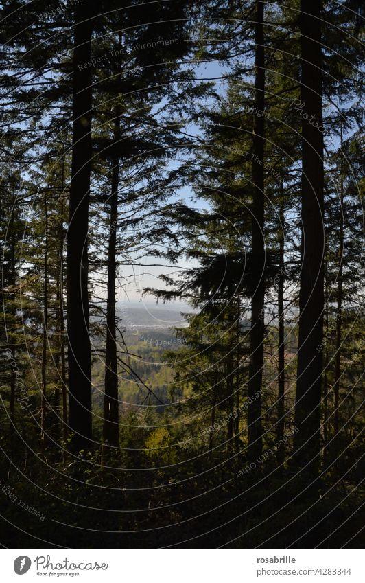 weit weg | Blick in die Ferne zwischen dunklen Bäumen hindurch Landschaft Tal Berg Wald dunkel Schwarzwald Gebirge Hügel Weite schauen Überblick Natur Sommer
