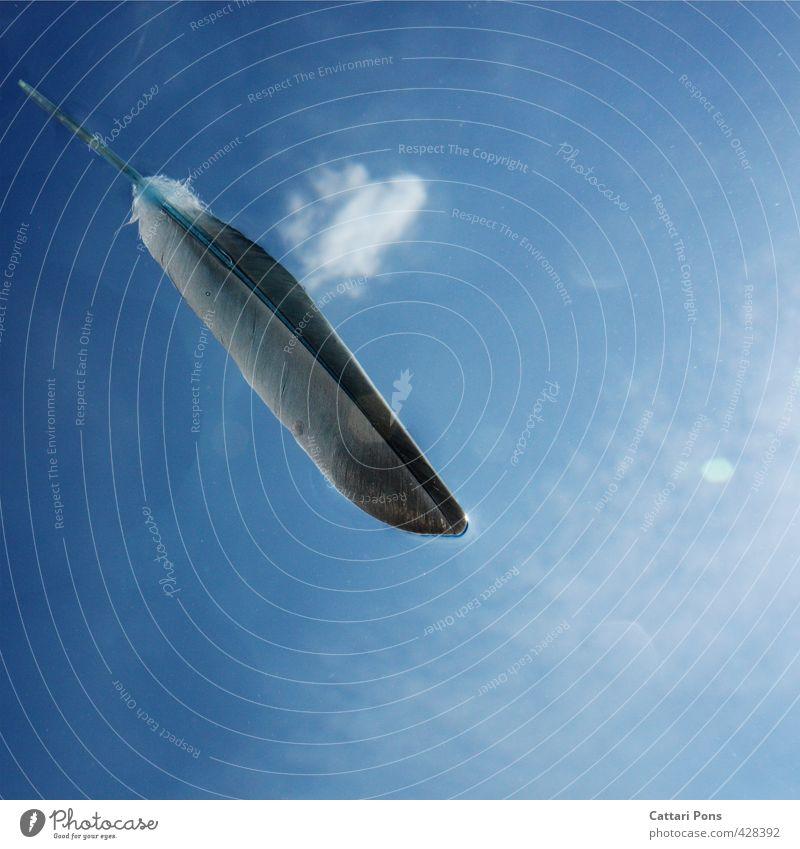 everlasting dream Himmel blau weiß Wolken grau hell liegen frei frisch nass ästhetisch Feder nah Flüssigkeit himmelblau luftig