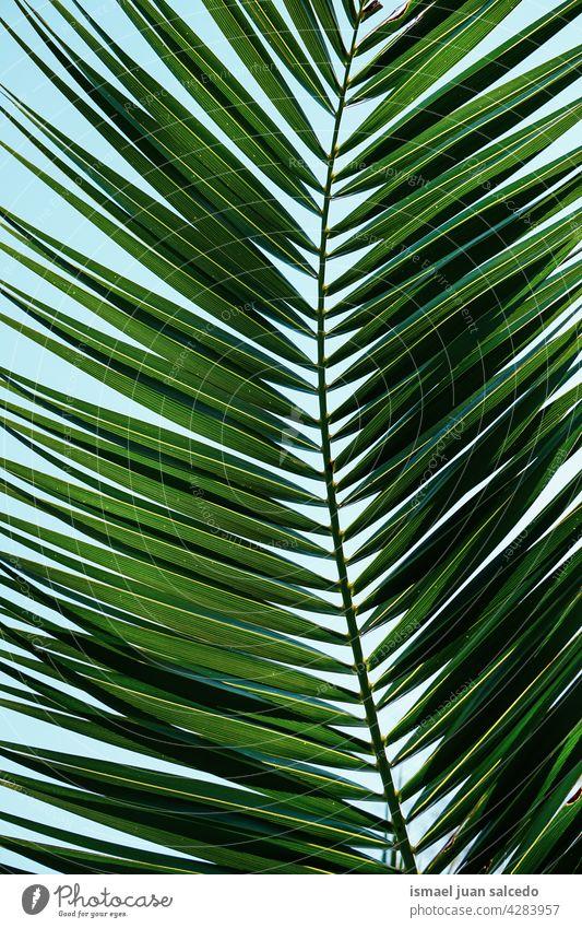 grünes Palmblatt im Frühling Palme Handfläche Baum Niederlassungen Pflanze Blätter Blatt Natur tropisch texturiert Hintergrund abstrakt Sommer exotisch Tag