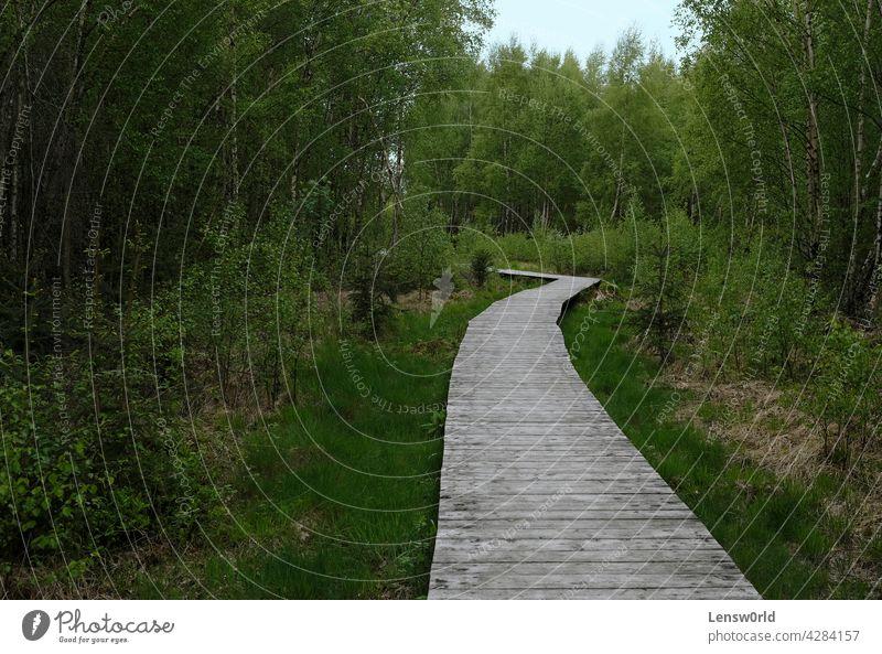 Holzweg, der durch einen Wald in der Eifel führt leere Straße Umwelt grün Wanderung Hurtgenwald hürtenwald keine Menschen im Freien Weg der Weg nach vorn Bäume