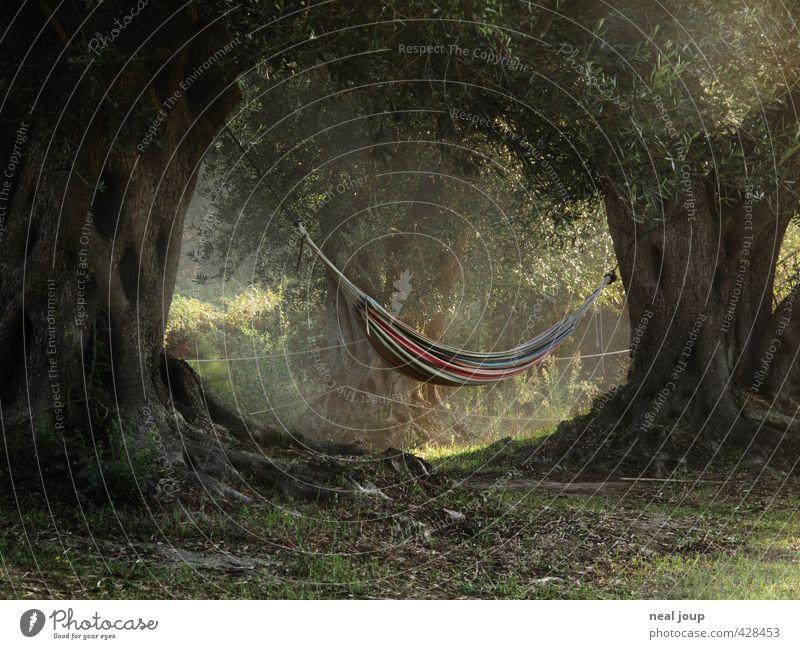 Zum Reinlegen schön. harmonisch Wohlgefühl Zufriedenheit Erholung ruhig lesen Baum Olivenbaum Park Griechenland Korfu Hängematte hängen liegen schaukeln