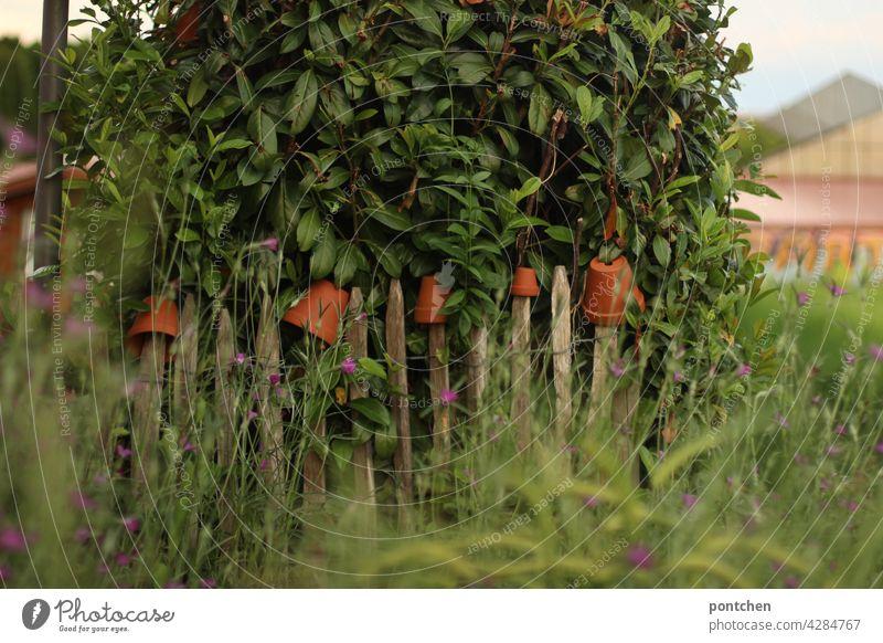 Wildwuchs. Ein mit Bumentöpfen geschmückter Holzzaun vor einem Feld holzzaun natur gartenbau strauch feld pflanze landleben zaunlatten blumentöpfe gras Pflanze