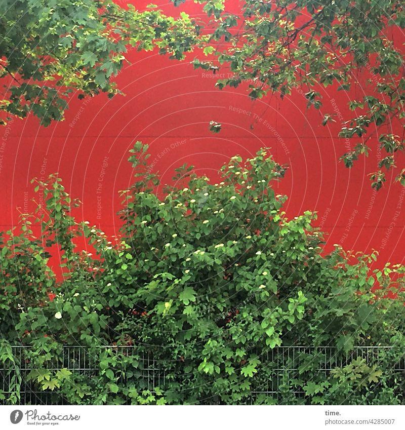 Geschichten vom Zaun (103) busch wand zaun baum ast wachstum blatt blätter rot grün wachsen farben kontrast üppig schutz rückwand leuchten blühen