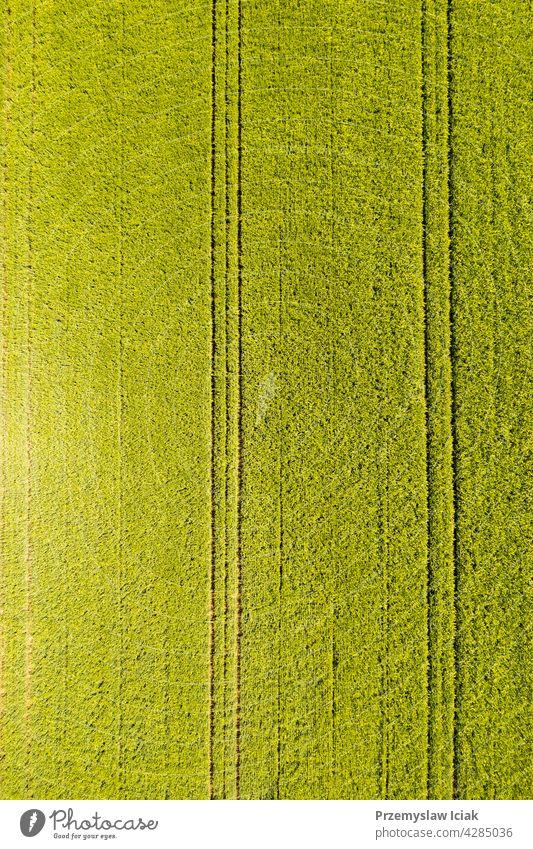 Grünes Feld in ländlicher Umgebung. Landschaft mit landwirtschaftlichen Getreidefeldern. Antenne Müsli Lebensmittel Bodenbearbeitung jung pflügen Muster