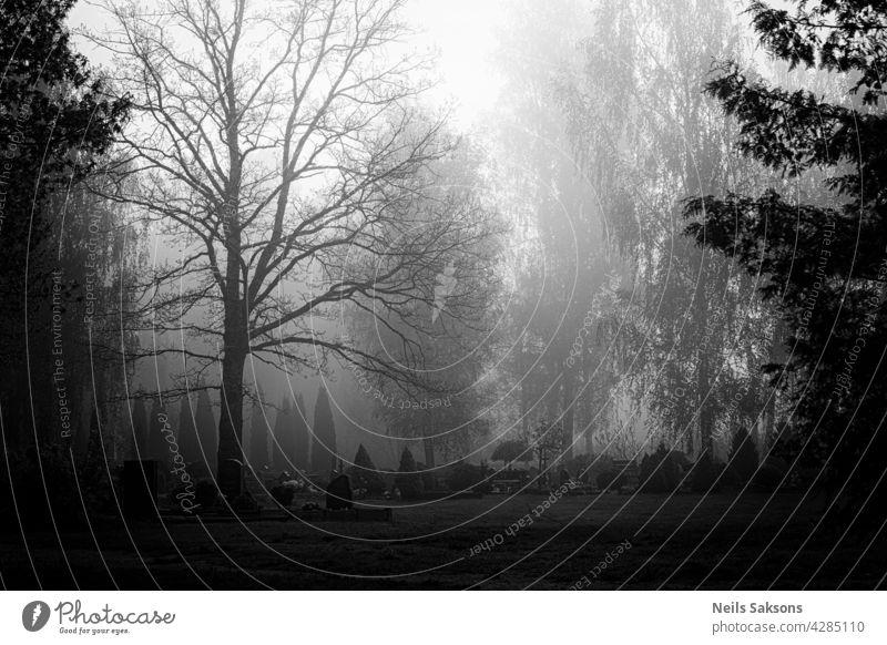 Blick auf einen Friedhof mit Morgennebel mit Grabsteinen und niemand da und Gras und Bäume im Frühling grav Religion & Glaube tot durchkreuzen Vergänglichkeit