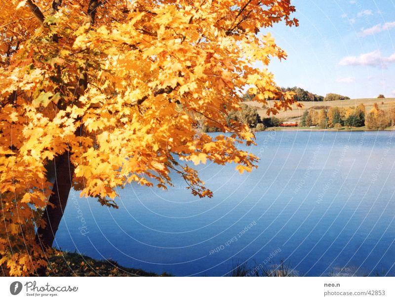 Ein Tag im Herbst Sonne Natur Landschaft Wasser Himmel Wolken Sonnenlicht Schönes Wetter Baum Blatt Wald Seeufer Teich natürlich blau braun gold orange türkis