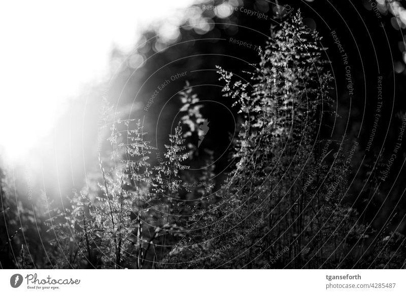 Wilde Gräser Gras Sonnenlicht Pflanze Wiese Außenaufnahme natürlich Menschenleer Sommer Natur Umwelt Wildpflanze Lichtspiel Lichteinfall hübsch