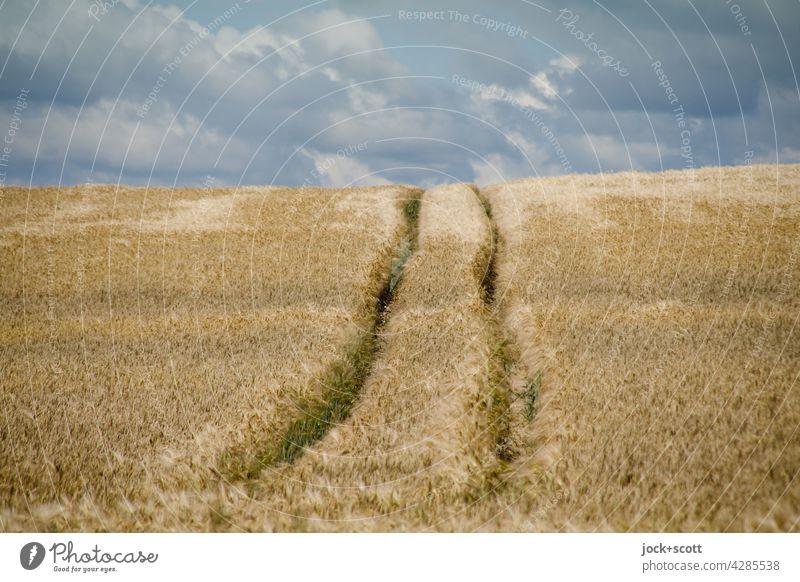 auf der Spur im Kornfeld Landschaft Wolken Himmel Weizenfeld Sommer Spurrinne authentisch lang Wärme Symmetrie Wege & Pfade Panorama (Aussicht) Landwirtschaft