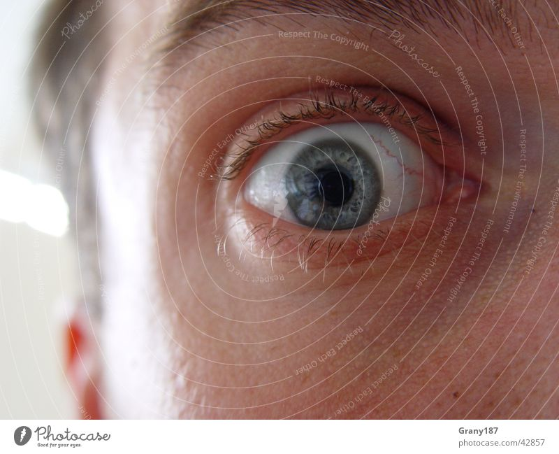 AAAAAAHHHHHHHHHH!!!!!! See Mensch Leben Schrecken erschrecken Pupille Wimpern erstaunt kalt Panik Gefäße nah Wut Mann Makroaufnahme Nahaufnahme Angst Auge