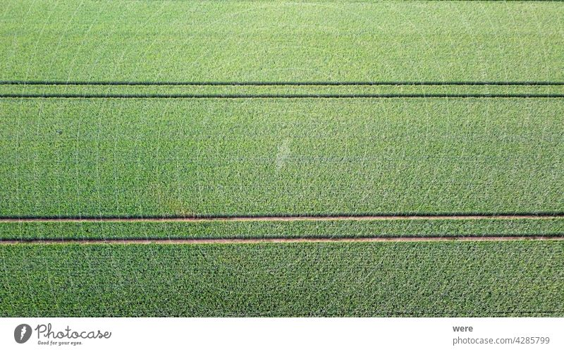 Traktorspuren unterteilen die Gleichmäßigkeit des Feldes in ein Muster Bereich Flug Hintergrund Ansicht Luftaufnahme Ackerbau Vogelschau Textfreiraum Trennung