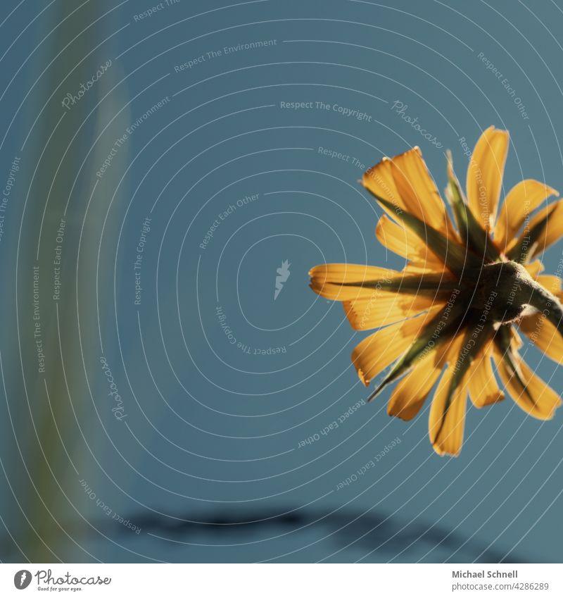 Gelbe Blüte von rechts Blühend blühen blühende Blume blühende Frühlingsblume Unschärfe Blütenblätter gelbe Blumen gelbe Blüten Natur Frühlingstag