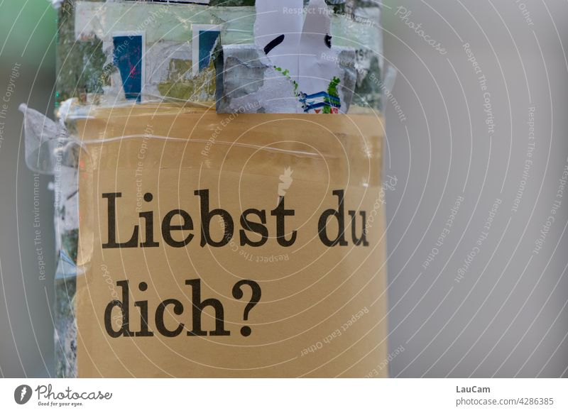 Liebst Du Dich? Liebe lieben Eigenliebe Frage Fragen Plakat Ausdruck Gute Frage Straßenfotografie Laternenpfahl beklebt bekleben verboten herzensangelegenheit