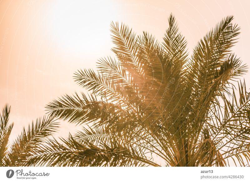Tropischer Tourismus Paradies Palmen in warmen sonnigen Sommer Sonne Himmel. Sonnenlicht scheint durch die Blätter der Palme. Schöne Fernweh Reise Reise-Symbol für Urlaub Reise nach Süden Urlaub Trauminsel