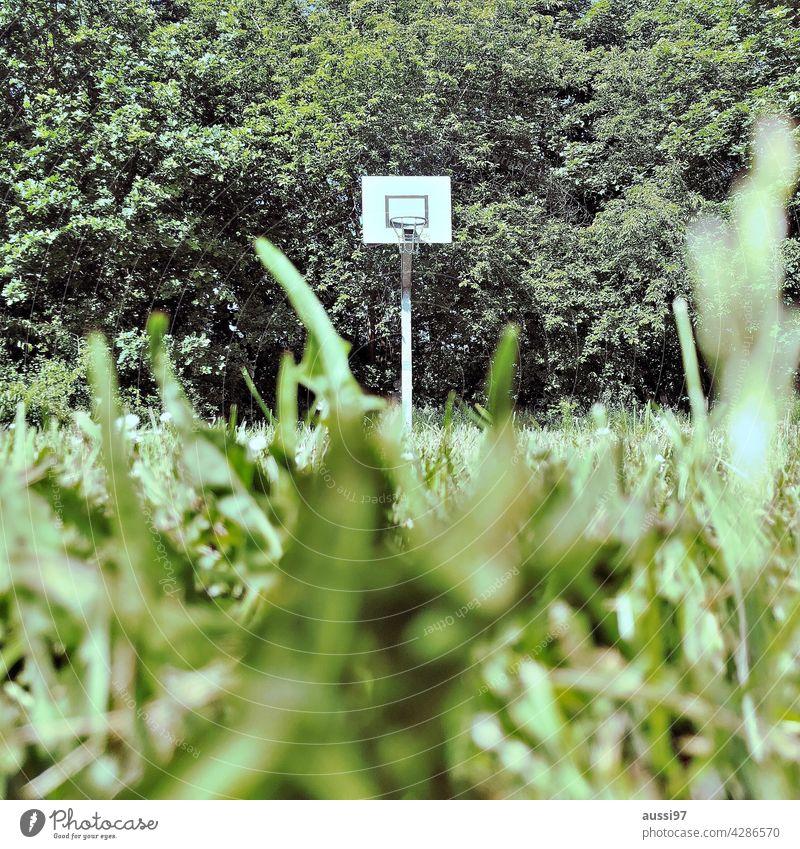 Non-urban court Jungle Court Basketball Korb Netz Pflanzen Wald Grün Klima Klimawandel