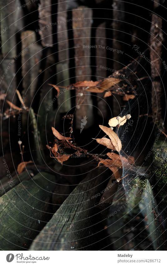 Spinnennetz mit welken braunen Blättern im Herbst vor einem alten Holzschuppen in Rudersau bei Rottenbuch im Kreis Weilheim-Schongau in Oberbayern Netz Blatt