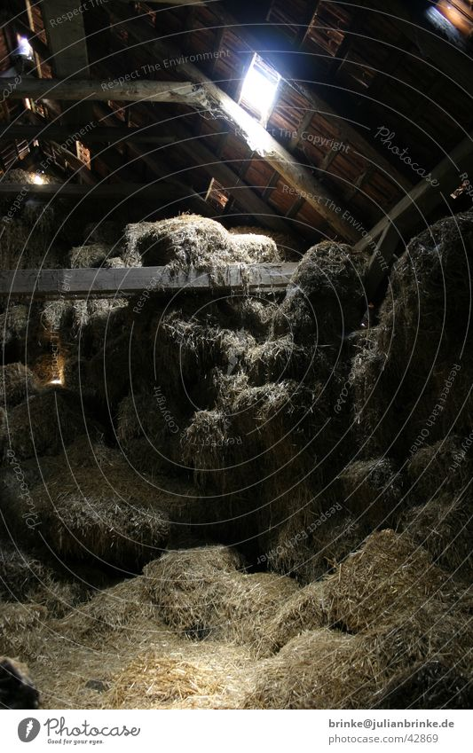 Stroh - Boden II dunkel Bodenbelag Bauernhof Handwerk Dachboden Lager Krefeld