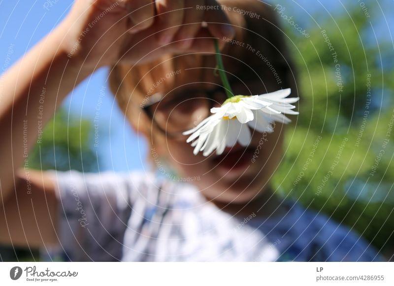 Junge zeigt ein Gänseblümchen in die Kamera Stil Design Garten Muttertag Mensch Gefühle Geschenk Blume Farbfoto Blüte Frühling Geschenke Kind Eltern Natur