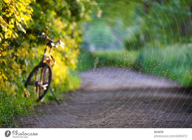 Sommerstimmung: Fahrrad am Wegesrand mit Fliegenschwarm sommerlich Fahrradfahren Radtour Radtourpause Unschärfe Außenaufnahme Farbfoto Tag Menschenleer grün