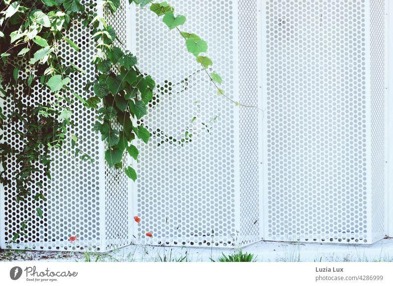 Parkhauswand aus weißen Lochblech, sommerlich dekoriert in grün und rot Wand hell Gebäude Laub Mohn Klatschmohn Sommer Gras urban freundlich blühen blühend