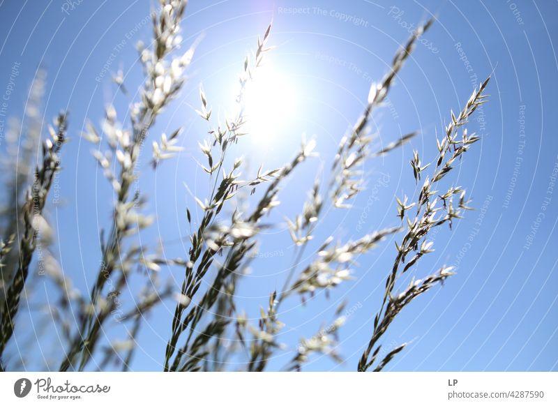 Hintergrund von trockenen Kräutern gegen den blauen Himmel und Sonne Feld feminin Wärme fest Hoffnung Freiheit Kontrast Low Key geheimnisvoll träumen Gefühle