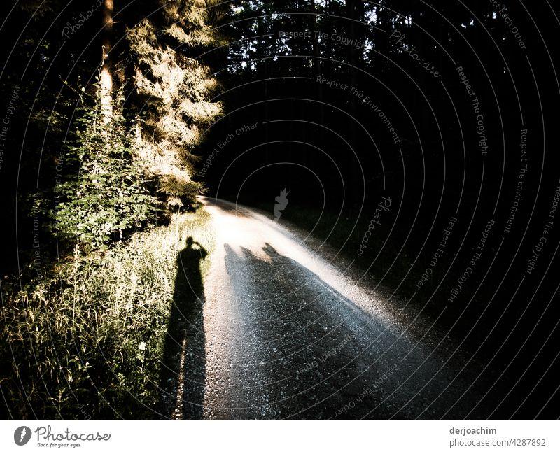 Ein Kleiner Schatten auf dem Waldweg, erleuchtet von einem Schein der Sonne, macht ganz in Ruhe sein Foto. Natur Landschaft sträucher Herbstfarben Erholung