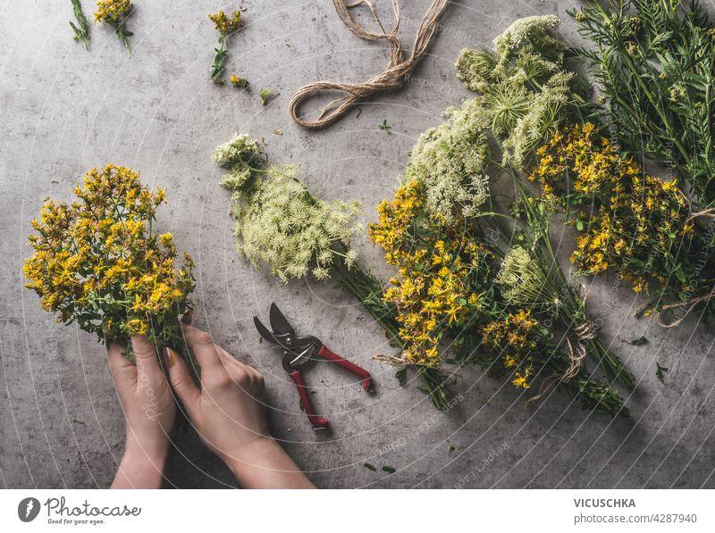 Frau Hände Vorbereitung Bündel von frischen medizinischen Kräutern. Ausrüstung wie Garten Schere, Schnur auf grauem Beton Hintergrund. Natürliches und rustikales Konzept. Ansicht von oben