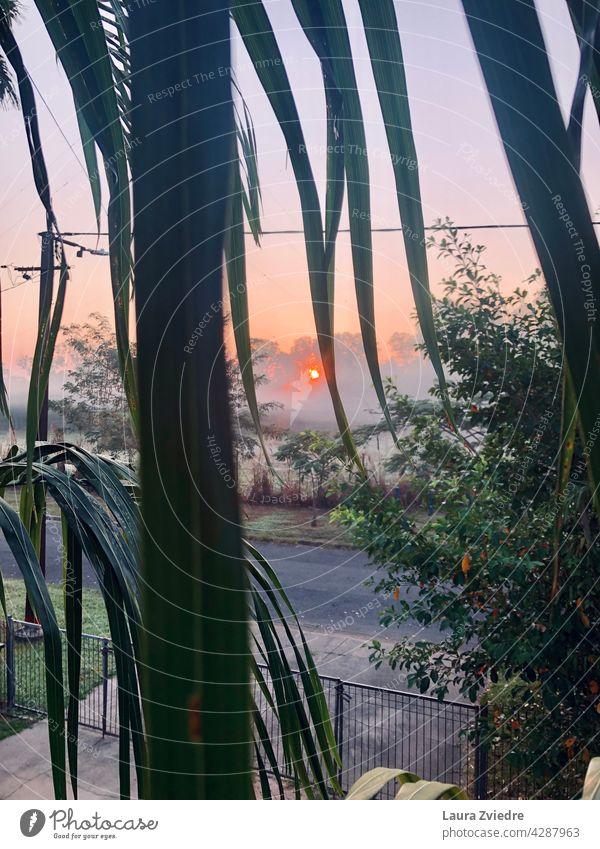 Sonnenaufgang und Morgennebel durch Palmenblätter Nebel neblig Baum Landschaft Sonnenlicht Natur im Freien Saison Umwelt schön Licht Hintergrund Ansicht grün