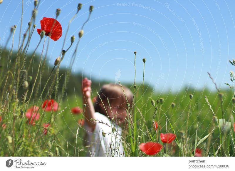 landleben. ein kind läuft an einem Feld mit Weizen und Mohnblumen vorbei . Sommer kleinkind feld idylle kinderspiel freude sommer mohnblumen landwirtschaft